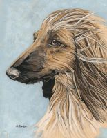 afghan hound by cloudkev