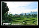 Rice field 2 by sapo0on