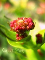 Carpe Diem by Tap-Photo-and-Co