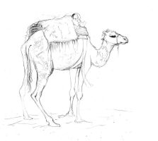 Douz Tourist Camel by amwah