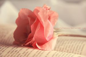 Rosy afternoon . . by RustedToTheCore