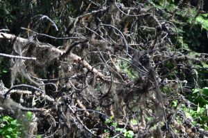 STOCK - Creepy Dead Branches 3 by jocarra