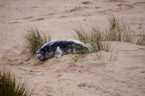 Dune baby by WendyMitchell