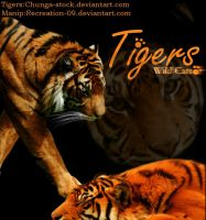 Tigers ::Wild Cats:: by Recreation-09