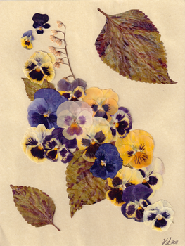 Pressed Pansy Collage by 8Kaylin8