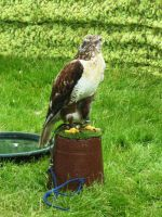 Glamis Castle - Birds of Prey 04 by Narric-SB0