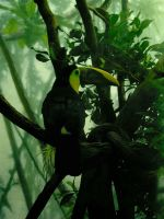 Central Park Toucan by Rowen-silver