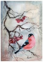 bullfinch on the branch by kosharik69