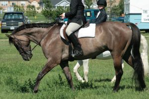 Quarter Horse Stock 93 by tragedyseen
