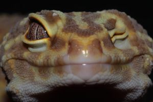 Smartypants gecko... by CamStatic