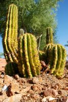 Small Cactus by DavidMCoyle