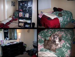 My Room (with Charlie photo-bombing) by jack104