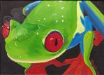 Red Eyed Treefrog by Talkris