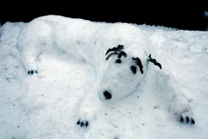 Rocky the Snow-dog by hchic4life