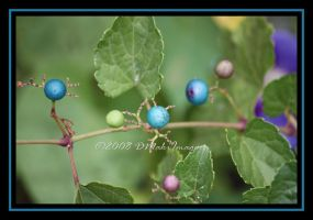 Berries of Blues by SassyPants61762