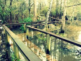 Escambia River Boardwalk by MossBerg850