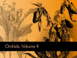 Orchids, Volume 4 by remittancegirl