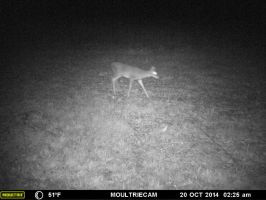 Look what was on the trail cam c: by legoninjagogirl