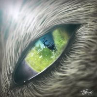 Cats Eye by TRAEMORE