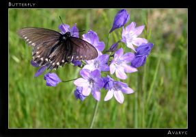 Butterfly. by Avaryc