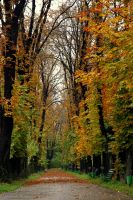 autumn colors after rain by anmaria