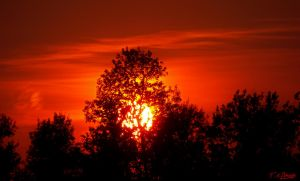 Glorious Sunset in Eastern Ontario by Nini1965
