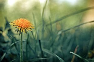 Flower in the grass 04 by rejmann