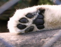 Snowlepards Paw by Passion-For-Pictures