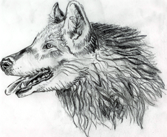 Pencil Wolf Activate by marissippi