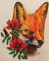 Fox Drawing by IsabelIntangible