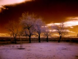 Infrared Trees by lehighost