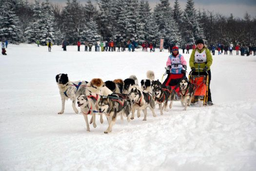 Sled dogs by Pawkeye
