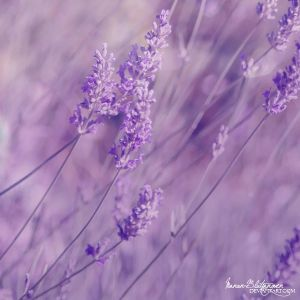 .:Blown with the Wind:. by Manon-Blutsanguen