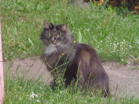 My other cute cat by Wolverina13