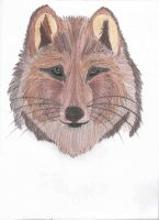 The Brown Wolf Dog. by JulieSoM