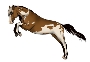 BRlS Pearl Harbor - Jumping by Whiteout-Kennels