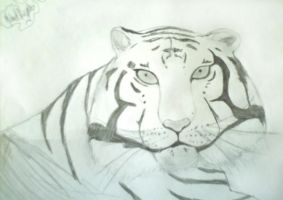 White Tiger by MIKEYV13
