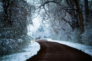Winter Trails by parkertinsley