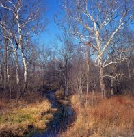 Creek path.color.img653 by harrietsfriend