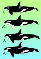 Orca adoptables 3 -CLOSED- by iiduh
