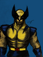 Wolverine by nicollearl