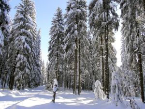 Winter Forest by xmas-kitty