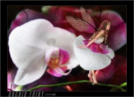 Orchid Fairy by faded-impression