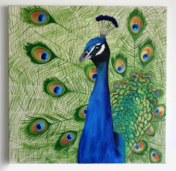 Peacock by Shelley-May