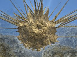 sea urchin by Oxnot