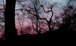 Sunset through trees Iii by sophhks