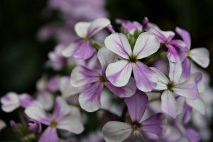 purple and white mixed by emilyerin11