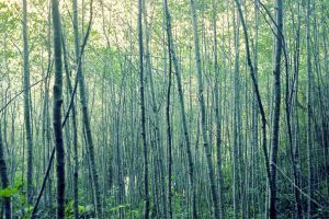 Trees by blakelemmons