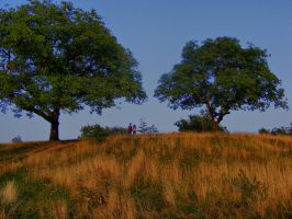 Hill_Background_stock by drowned-in-air-stock