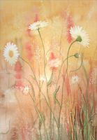 Daisies by louise-art
